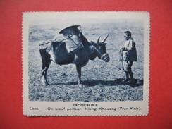 Chromo Image Vignette  Indochine - Laos - Un Boeuf Porteur - Keing-Khouang (TranNinh)  6.5 X 7.5 Cm - Chromos