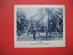 Chromo Image Vignette  Togo -  Plantations De Cocotiers  -   6.5 X 7.5 Cm - Chromos