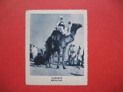 Chromo Image Vignette  Tunisie - Méhariste -   6.5 X 7.5 Cm - Chromos