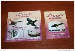 Birds  2016 Montserrat - Birds