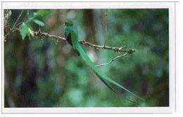 IM043 : Jungle Mania Auchan 2011 N°054 Quetzal Resplendissant (oiseau) - Stickers