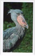 IM046 : Jungle Mania Auchan 2011 N°074 Bec En Sabot Du NIL (oiseau) - Stickers