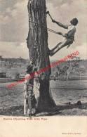 Native Climbing Tree With Vine - Nouvelle-Zélande