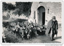 CPSM - LES-BAUX-DE-PROVENCE (B Du R) - Vieux Berger Des Baux - Tirage Argentique Artisanal - Les-Baux-de-Provence