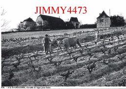 CPM - BOISSIERES 46 Lot - A La St-Grégoire Travaille Ta Vigne Pour Boire - Edit. J-L. NESPOULOUS - Scans Recto-Verso - Vines