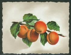 Rare // Etiquette//  Eau De Vie D'Abricots, Suisse - Fruit En Groenten