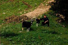 Photo Couleur Originale La Chèvre (Capra Aegagrus) Chèvres Sauvages à La Cloche Et Rencontre Montagnarde - Personnes Anonymes