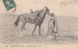 CAVALIER ARABE - Algérie