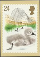 Swans, 24p, Cygnet, 1993 - Royal Mail Stamp Card PHQ 149b - Stamps (pictures)