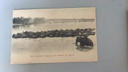 CARTOLINA  WILD ELEPHANTS CROSSING RIVER MENAM AD AJUTHIA - Tailandia