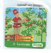 16075 - MAGNET - SAVEOL - FRUITS ET LEGUMES - LA RECOLTE - Magnets