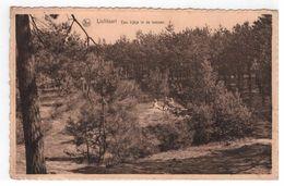Lichtaart - Een Kijkje In De Bossen - Kasterlee