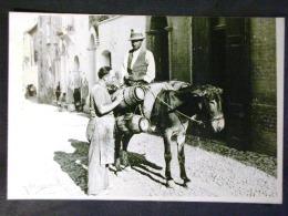 MOLISE -TERMOLI CAMPOBASSO -SAN MARTINO IN PENSILIS -F.G. LOTTO N°613 - Campobasso