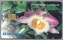 MY.- Telefoonkaart. TELEKOM MALAYSIA. Dendrobium Loddigesii. Orchidee, Miniatuurorchidee - Bloemen
