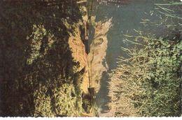 Han-sur-Lesse -  Grotte De Han - La Sortie - België