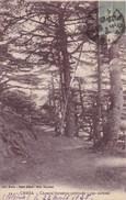 Algerie, Chréa, Chemin Forestier (pk40491) - Algérie
