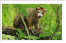 IM054 : Jungle Mania Auchan 2011 N°109 Lemur Couronné - Unclassified