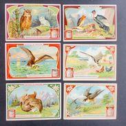 Figurine LIEBIG - Uccelli  Di Rapina - Rif.  N° 872 - Liebig