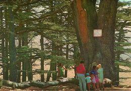 Lebanon (Libano) The Cedar Of Lamartine, Le Cèdre De Lamartine - Libano