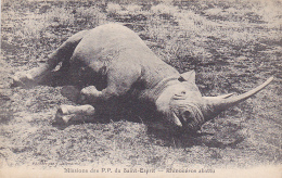 Missions Des P. P. Du Saint Esprit - Rhinocéros Abattu - Pas Circ - Rhinocéros