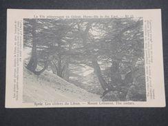 SYRIE - Carte Postale - Les Cèdres Du Liban - L 10053 - Syria
