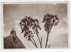 Somalia Italiana - Carte Neuve. Vera Fotografia. Carte N°25. Palme Pittoresche - Somalie