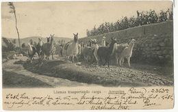 Arequipa Llamas Trasportando Carga Lamas  P. Used Arequipa 3 Stamps Envoi Pont De Theruy - Pérou