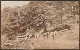 The Woodsman's Prize, Lumberjacks, 1904 - Photochrom RP Postcard - Professions