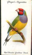 Image Player's Cigarettes A Series Of 50 N°32 Aviary And Cage Birds Red-Headed Gouldian Finch Oiseau Texte Au Dos - Player's