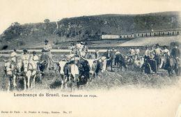 Bresil - Lembrança Do Brasil - Una Fazenda Na Roça - Attelage De Boeufs Et De Mules - Brazil