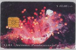 PHONE CARD CUBA (E3.8.3 - Cuba