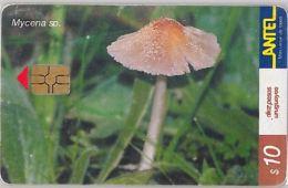 PHONE CARD URUGUAY (E6.22.3 - Uruguay
