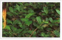 IM055 : Jungle Mania Auchan 2011 N°136 Papillon Comète Mâle 6 - Unclassified