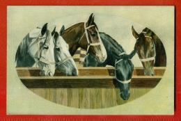 BEAUTIFUL HORSES VINTAGE POSTCARD 591 - Pferde
