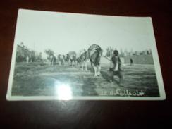 B671 Africa Pastore Con Cavalli Cm9x14 - Cartoline