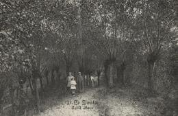BELGIQUE - FLANDRE OCCIDENTALE -KNOKKE - LE ZOUTE - Petit Bois (n°32). - Knokke