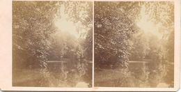 Stereofoto, Water/Ven/Meer In Een Bos - Stereoscoop