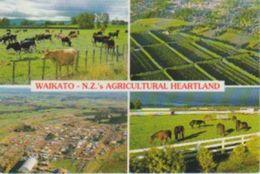 (NZ38)  WAIKATO. NEW ZEALAND AGRICULTURAL HEARTLAND - Nueva Zelanda