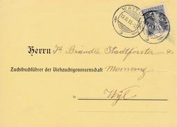 1919 Geburtsanzeige Viehzuchtgenossenschaft Gelaufen Von Wattwil Nach Wyl. Mi:138xII Tellknabe - Lettres & Documents