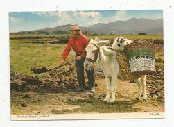 Cp , Métier , Agriculture , Tourbe , Peat-Cutting , Irelande , Ireland , âne , Mouton , Vierge - Landbouwers