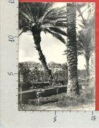 CARTOLINA VG GIORDANIA - GERICO - Tra I Palmeti Il Monte Della Tentazione - 10 X 15 - ANN. 195? - Giordania