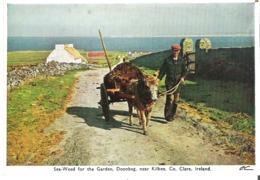 Sea-Weed For The Garden, Doonbeg, Near Kilkee, Co. Clare, Ireland - Clare