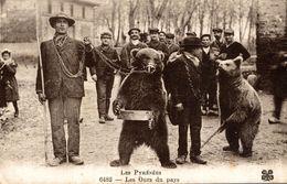 LES PYRENEES  LES OURS DU PAYS - France