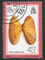 Belize, Scott # 481 Cto Used Seashell, 1980 - Belize (1973-...)
