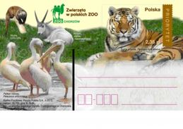 Cp 1631 Poland Polish Zoo Tiger 2013 Pelican Otter Addas - Félins