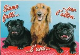 Cani Dogs Chiens Perro : Siamo Fatti...l'uno...per L'altra! - Chiens