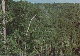 CPSM BRESIL Manaus - Vue Panoramique De La Jungle - Manaus