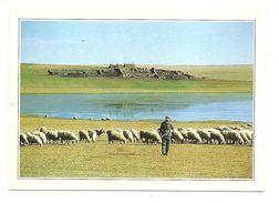 Mongolie Extérieure - La Steppe - (Photo Suzanne Held - Edito Service S.A.) - Mongolie