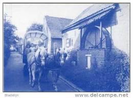 GOOIK (Vlaams-Brabant) - Molen / Moulin - Blauwe Prentkaart Van De Botermolen (hondenmolen) In De Woestijnstraat - Gooik
