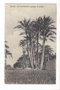 18361 - Libye Somalie Derna Un Caratteristico Gruppo Di Palme - Libia